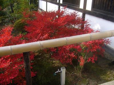 東福寺・ドウダンツツジの紅葉