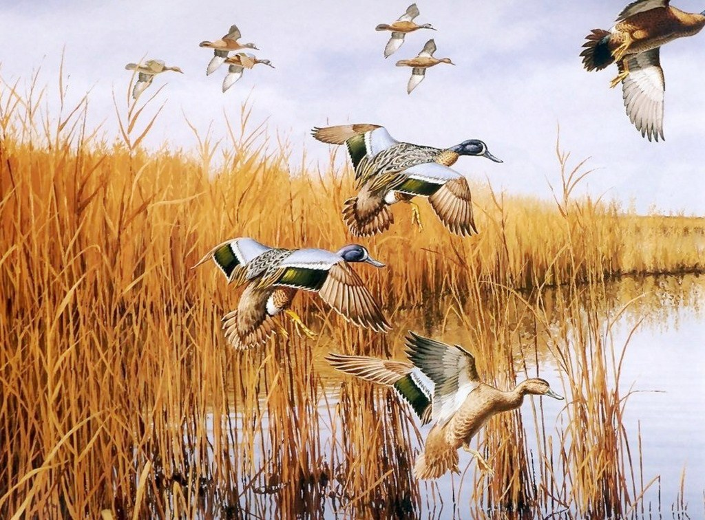 duck hunting wallpaper