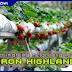 4 Tips Berjimat Jika Melancong ke Cameron Highlands