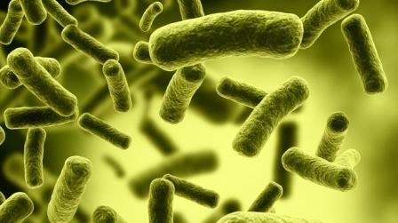 Hati-Hati!! Ciri Ciri Gejala Penyakit Kolera