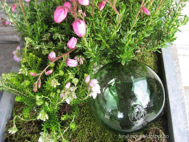 Inspirasjon til høstplanter i krukker - del 5. Furulunden.