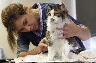Cara Menyembuhkan Kucing Keracunan