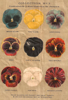 flower pansy background artwork antique seed catalog