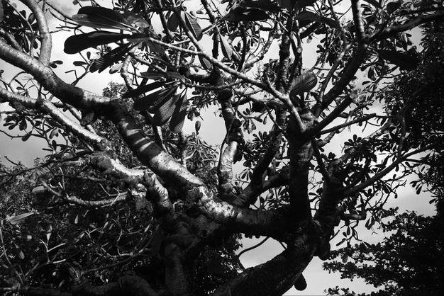 A tree inside La Loma Cemetery