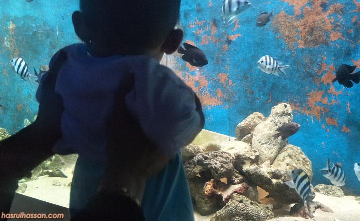Anak seronok tengok kehidupan marin di Akuarium Tunku Andul Rahman, Batu Maung, Penang