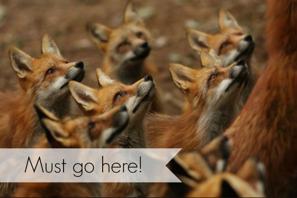 Putting this on my bucket travel list: a fox village in Japan!