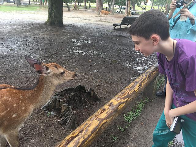 Javier mirando a un ciervo