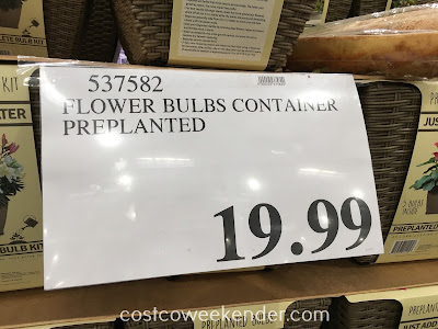 Deal for the Complete Bulb Kit Container at Costco
