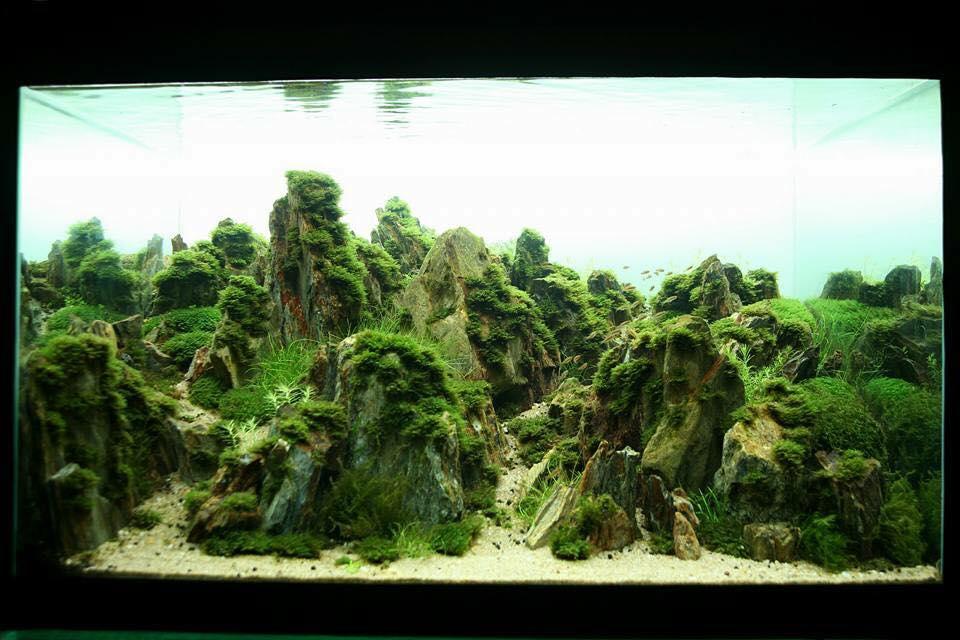 Bố cục thủy sinh núi đá phủ đầy rêu thủy sinh