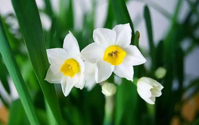 hoa thuy tien dep 6
