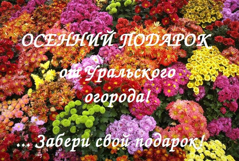 Смородина чёрная на Урале  Сады Сибири