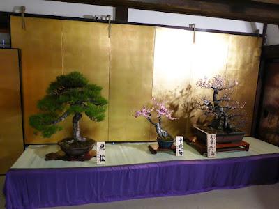 大阪天満宮・大盆梅展(盆梅と盆石展) 黒松