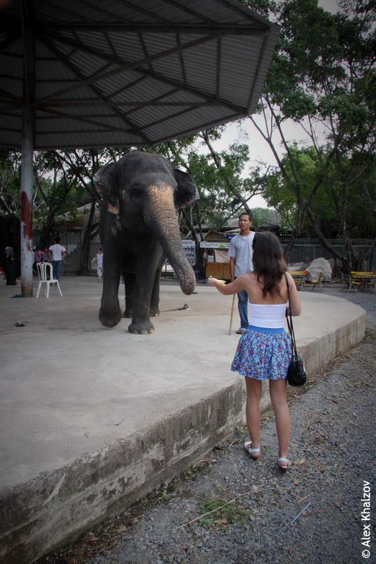 Подозрительный слон