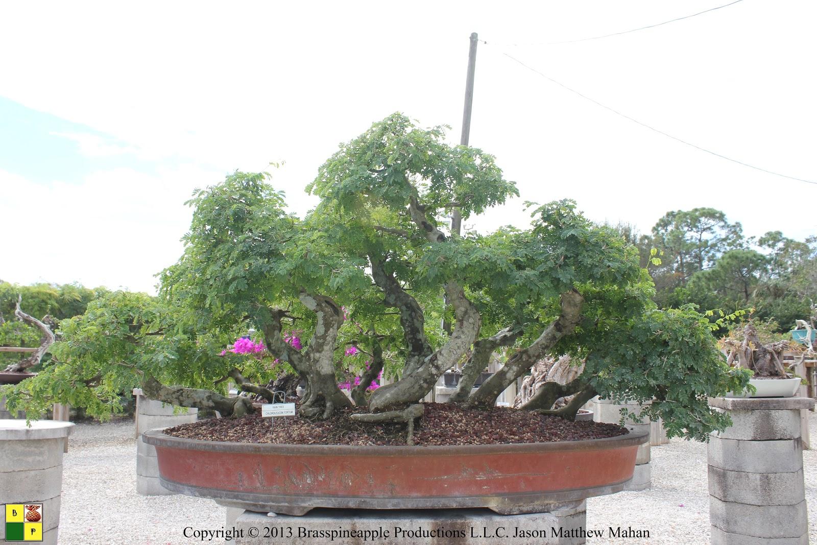 Bonsai Tree 30 Excellent Wigerts Bonsai Ideas
