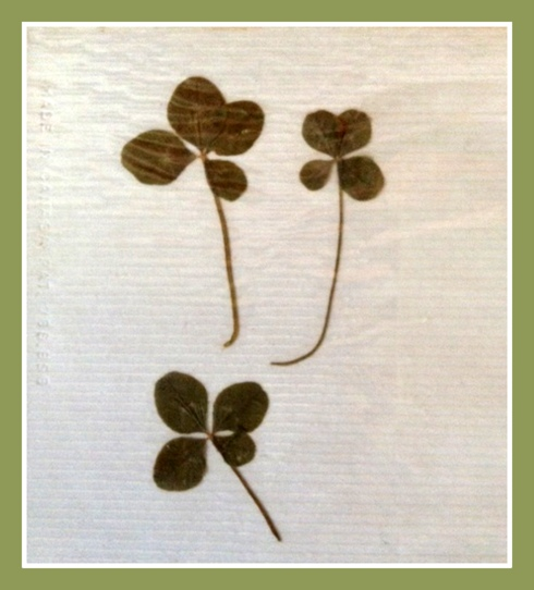three four leaf clovers found for me by my grandfather in the late sixties.