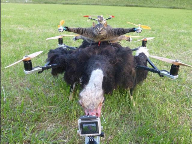 drone cat