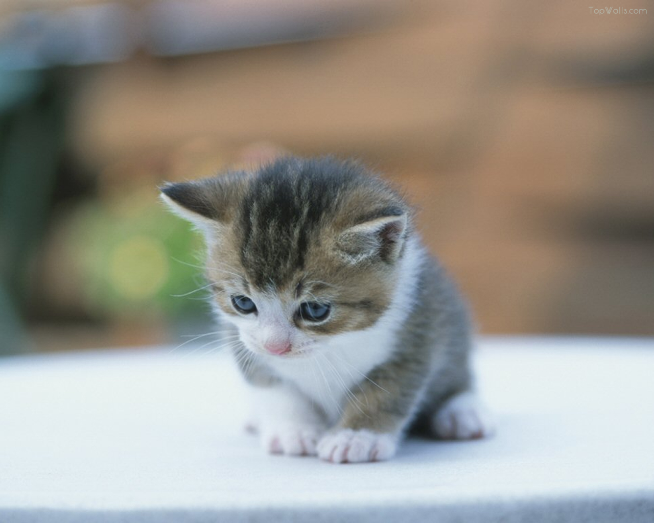 Wallpaper Kucing Anak Kucing Lucu Imut Gambar Foto Wallpaper
