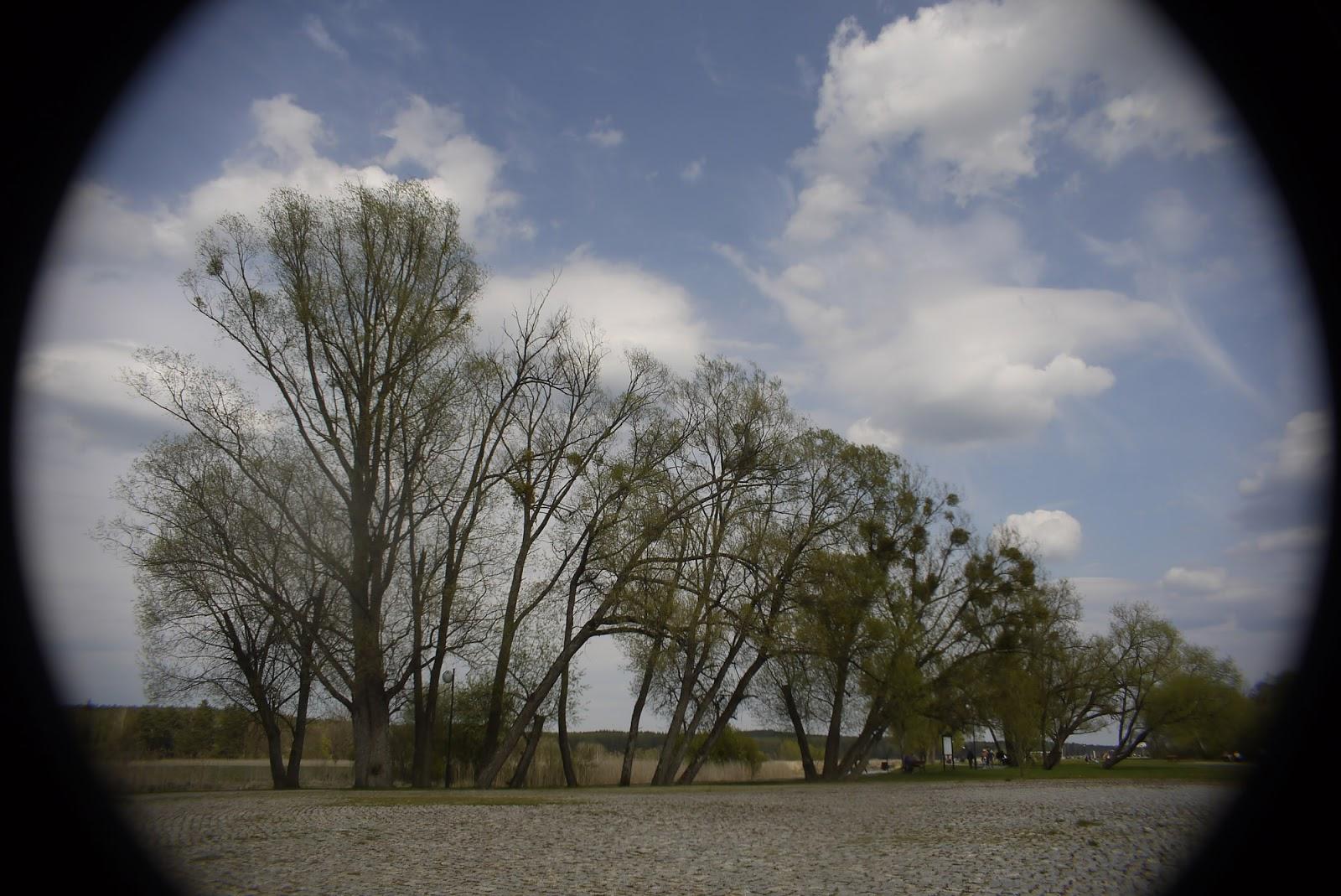 Cosmicar 12.5/1.9 @5.6 - landscape (2:3 crop).