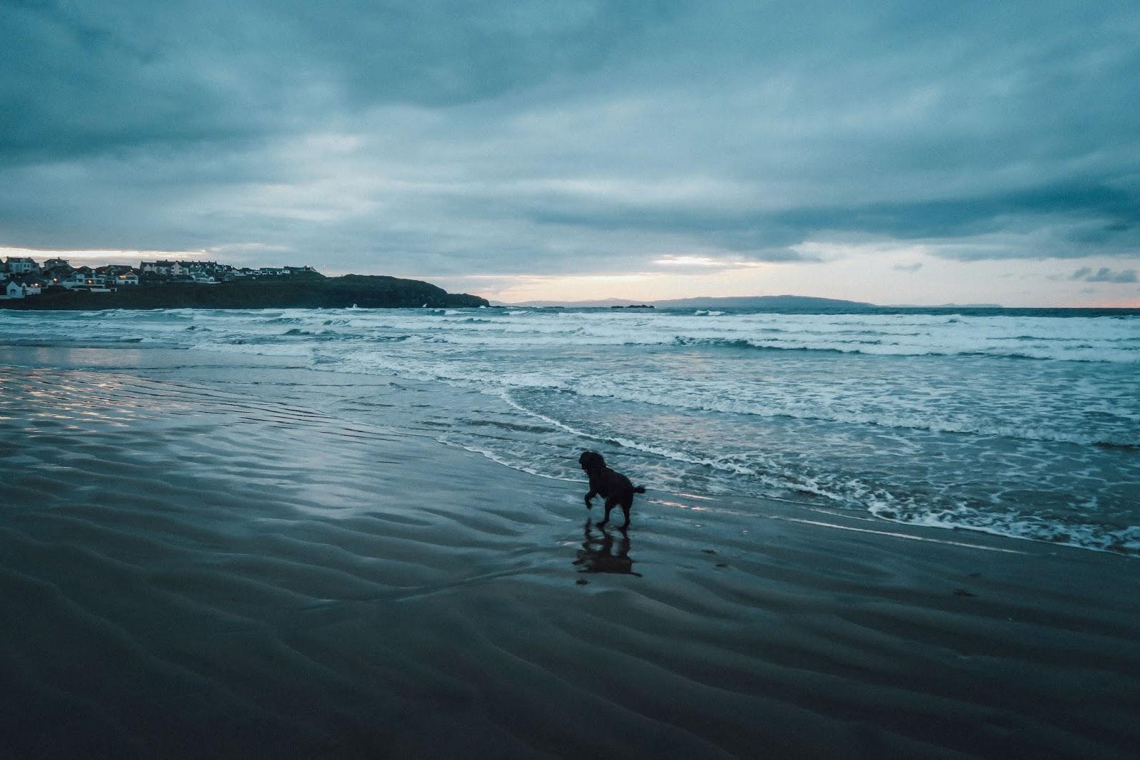 sea beach dog walk walking northern ireland liquid grain