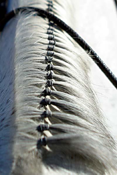 Z życia Koni Jakie Są Fryzury Dla Konia