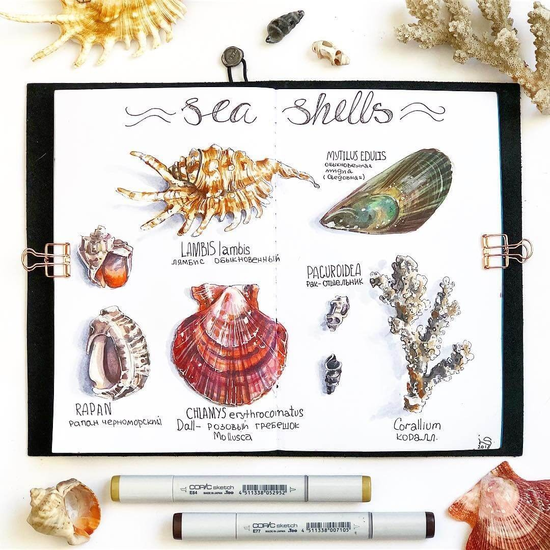 12-Sea-Shells-Irina-Shelmenko-Ирина-Шельменко-Travel-Diary-Sketches-and-Moleskine-Drawings-www-designstack-co