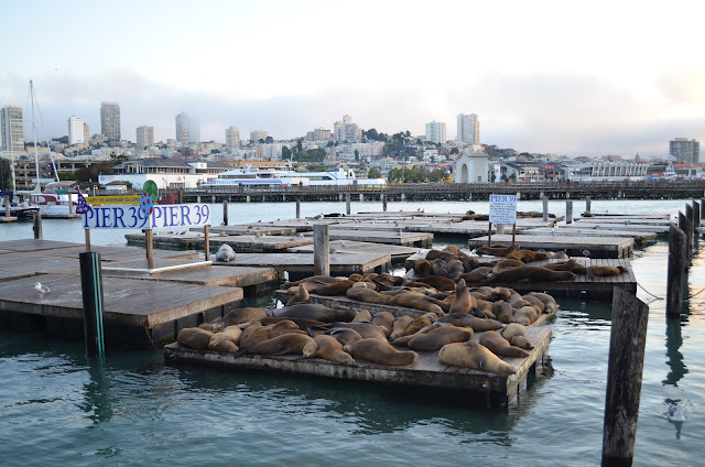Leões marinhos no Pier 39.