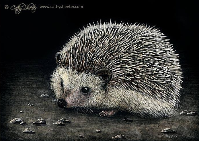 06-Hedgehog-Cathy-Sheeter-Hyper-Realistic-Scratchboard-Wild-Animal-Drawings-www-designstack-co