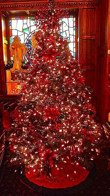 hallerts weihnachtsbaum test lohnt es sich etwas mehr. Black Bedroom Furniture Sets. Home Design Ideas