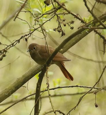 Nightingale reserve