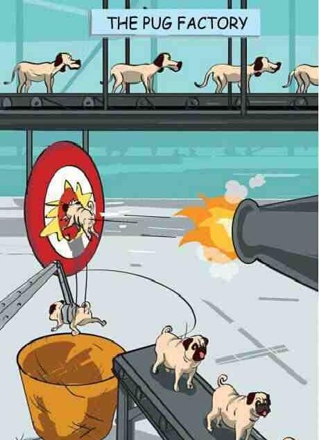 Funny Dog Cartoon Image Joke - Pugalism