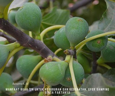 efek samping mengonsumsi buah tin