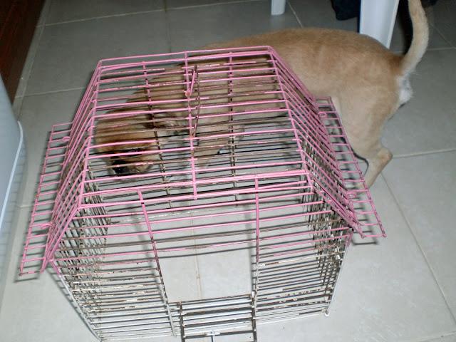 kuş-kafesinden-lamba-nasıl-yapılır