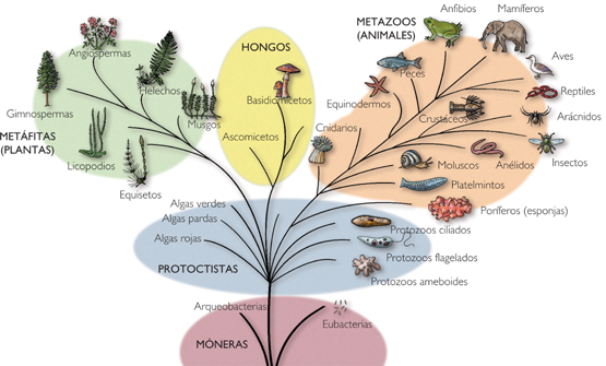 Resultado de imagen para dominios biologicos mapa conceptual