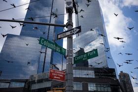 los rascacielos están  matando millones de aves por año.