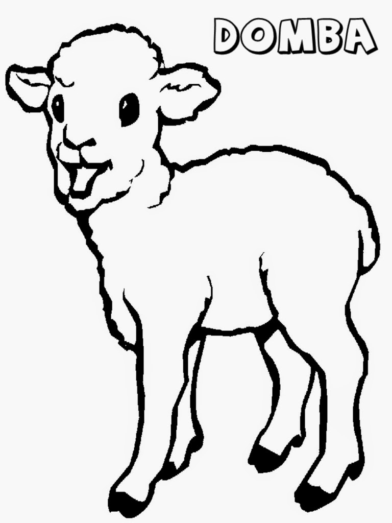 mewarnai gambar anak domba
