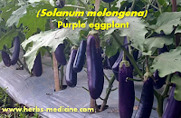 Sex Viagra use eggplant purple