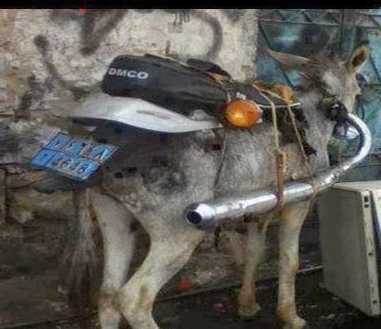 The Funny Animal Donkey Like As A Motor Bike Funny Picture ...
