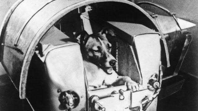 Laika: A cachorrinha que se tornou o 1° ser vivo a ir para o espaço