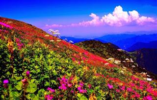 cánh đồng hoa mùa xuân