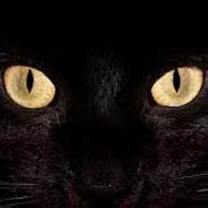 Mustika Mata Kucing