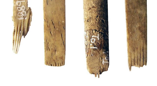 Oldest human bone tattooing kit found in Tonga