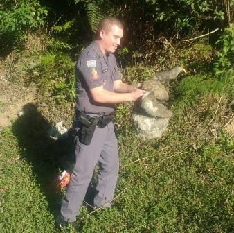Policiais Militares salvam um bicho preguiça de ser atropelado na rodovia em Miracatu
