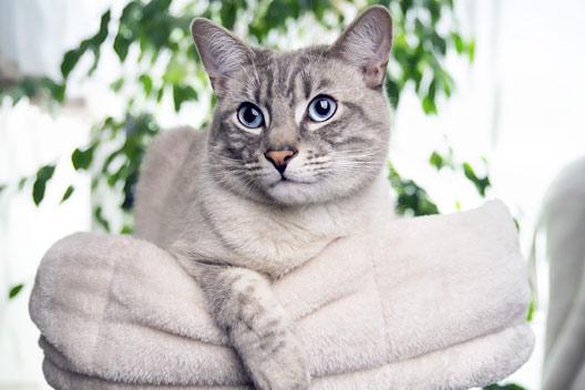 łupież i wypadanie sierści u kota
