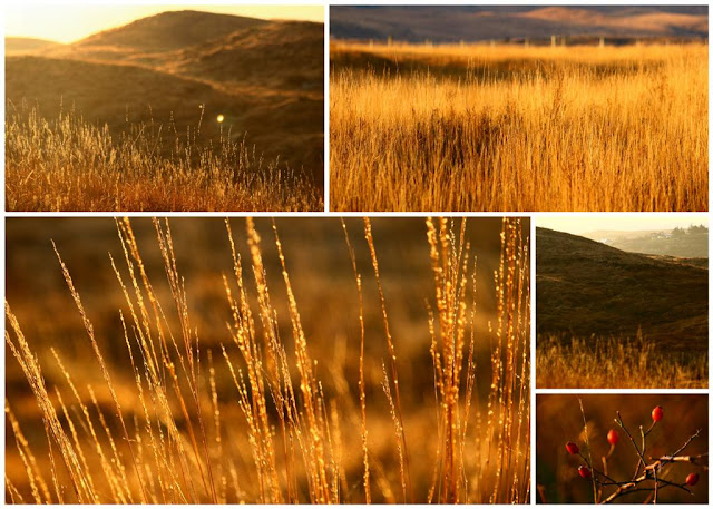 Golden grases collage© Annie Japaud Photography, Connemara, Ireland