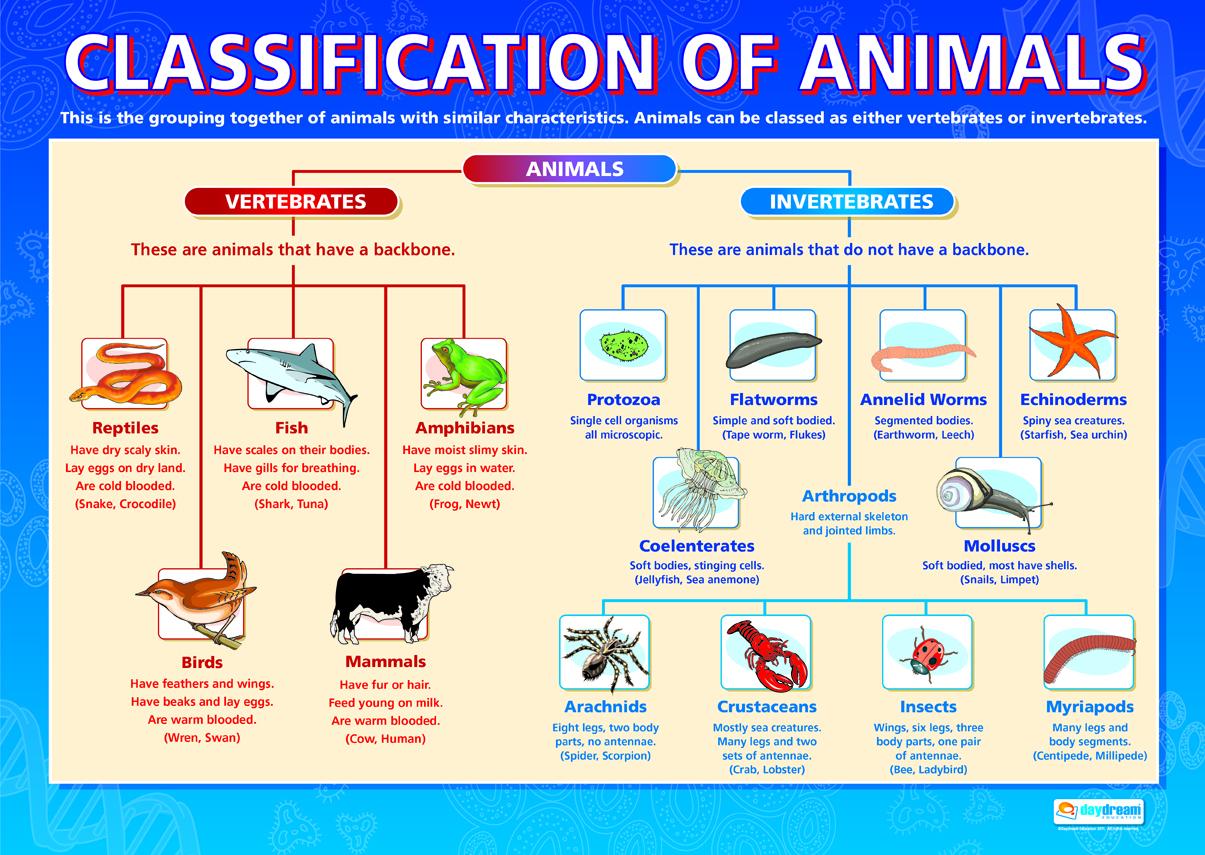 Teacher Vero Classification Of Animals