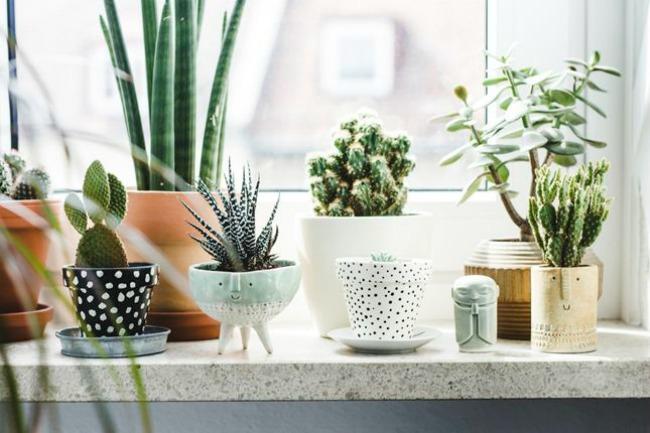 Inspiraci n deco decorar con plantas nobles pensamientos for Plantas de interior lengua de gato