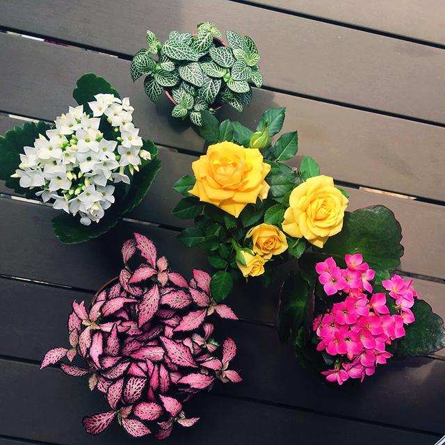 plantjes voor juf