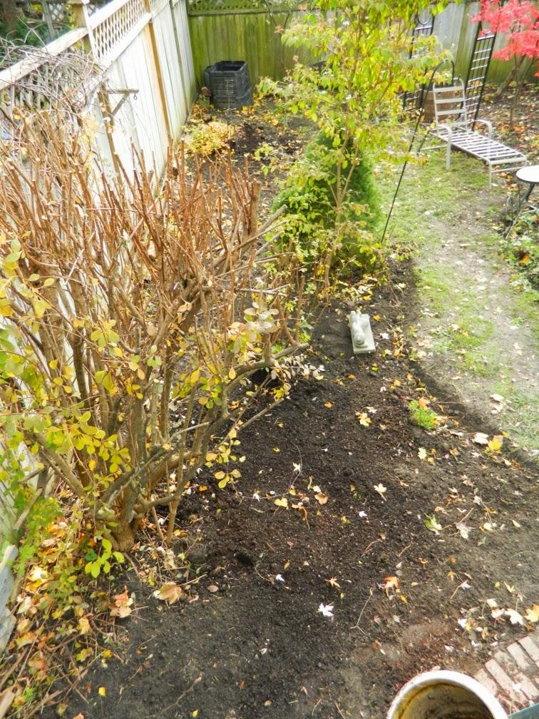Annex garden cleanup Annex Paul Jung Toronto Gardening Services after