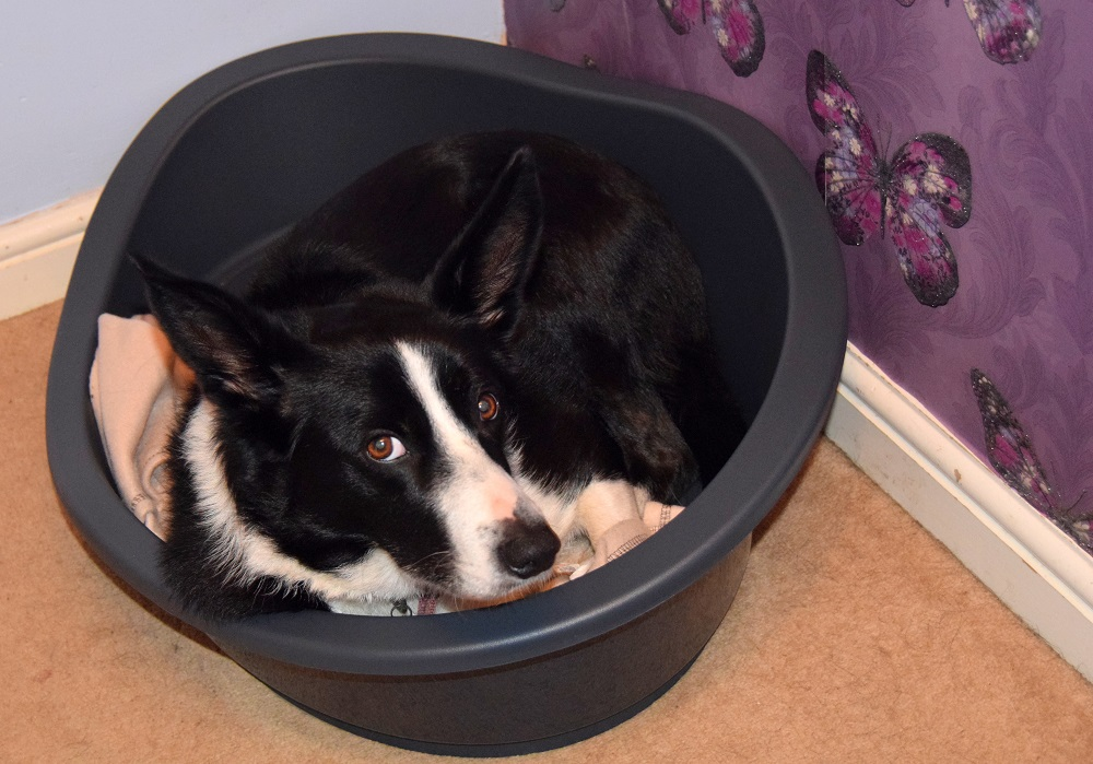 A Day In The Life Of Mollie The Collie