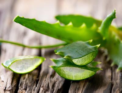 rawatan aloe vera, kegunaan aloe vera